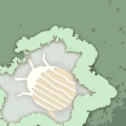 Bitwa o marchewki logo
